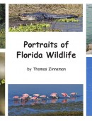 Portraits of Florida Wildlife